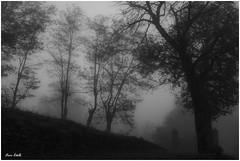 halloween (Marco Ridella) Tags: halloween alba nebbia autunno atmosfera ponteorganasco marcoridella