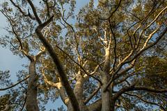 15-06-02-183850 Jingshan park (photobeijing2012) Tags: china beijing chine streetshot pkin zhongguo beijinglife viequotidienne