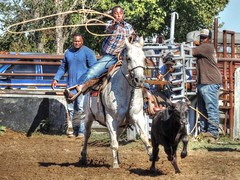 Fast Trac (clarkcg photography) Tags: calf roping rope horse work rodeo hobby practice jackpot rentiesville gettogether locals connorsropingteam
