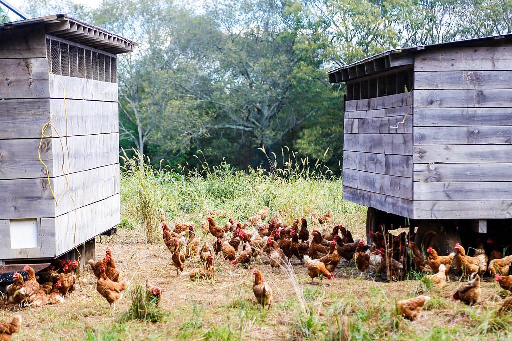 Dapper Dan Farm East Greenwich Rhode Island