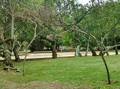 Encontro, dilogo e abrao.... (Meus Olhos) Tags: rj rio de janeiro cidade maravilhosa wonderfull city olympic brasil brazil bresil brsil brasile aterro do flamengo natureza rvores trees abrao