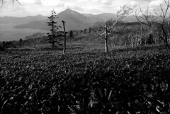 Mt.Eniwa from Mt.Monbetsu (threepinner) Tags: finedol iso100 selfdeveloped era era100 pentax pentaxm mzm 28mm f35 lakeshikotsu mteniwa mtmonbetsu mountainsnaps    chitose hokkaidou hokkaido northernjapan japan