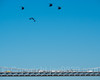 Helicopters at the George Washington Bridge, New Jersey-New York (jag9889) Tags: 20161010 usa aircraft manhattan waterway newyork outdoor 2016 bergencounty newjersey fortlee helicopter georgewashingtonbridge sky washingtonheights bridge newyorkcity hudsonriver jag9889 07024 airplane bridges bruecke brã¼cke copter crossing gw gwb gardenstate heli helikopter infrastructure k007 nj ny nyc pont ponte puente punt river span structure suspensionbridge transportation unitedstates unitedstatesofamerica wahi water zip07024 edgewater us