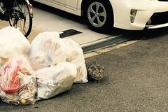 Today's Cat@2016-10-11 (masatsu) Tags: cat thebiggestgroupwithonlycats cameraphone apple softbank iphone catspotting osaka
