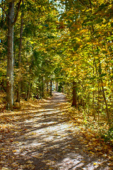 Autumn path (Joni Mansikka) Tags: autumn nature forest trees leaves branches colours light outdoor path sunlight green yellow ruissalo turku suomi finland