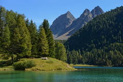 Lai da Palpuogna (balu51) Tags: ausflug spaziergang landschaft see berge bergsee wald grn blau stroll lake mountainlake mountain landscape noon autumn fall switzerland grisons graubnden bergn laipalpuogna september 2016 copyrightbybalu51