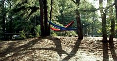 campground / mamiya m645 (bluebird87) Tags: campground cape henlopen delaware mamiya m645 dx0 c41 epson v600 kodak ektar 100 hammock