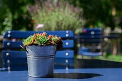 Kaffeepause in Bergn (balu51) Tags: ausflug wanderung bergn terrasse garten tisch stuhl tischdekoration blau dunkelblau mittag warm sonnig blue darkblue bokeh sunny table chair garden restaurant graubnden september 2016 copyrightbybalu51