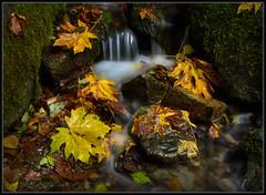 Mini-Waterfall (Ernie Misner) Tags: miniaturewaterfall waterfall kobayashipark universityplacewashington tacoma washington creek autumncolor autumn erniemisner nikon d800 nik lightroom capturenx2 hoyahd3polarizer f8andbeminiature