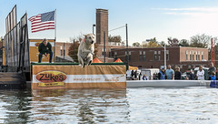 Brian_Dockdogs 2 LG_111116_2D (starg82343) Tags: