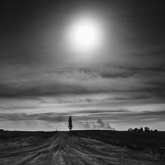 Lone Tree (Dan Constien) Tags: blackandwhite road county dirt dirtroad lonetree rural iowa clouds smoke story dramatic sonya7 minolta28mm danconstien midwest midwestmoment midwestival