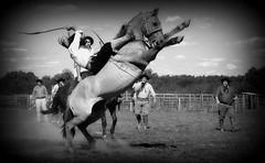 Sol e Marreco (Eduardo Amorim) Tags: gacho gachos gaucho gauchos cavalos caballos horses chevaux cavalli pferde caballo horse cheval cavallo pferd crioulo criollo crioulos criollos cavalocrioulo cavaloscrioulos caballocriollo caballoscriollos pampa campanha fronteira bag riograndedosul brsil brasil sudamrica sdamerika suramrica amricadosul southamerica amriquedusud americameridionale amricadelsur americadelsud cavalo         hst hest hevonen  brazil eduardoamorim gineteada jineteada
