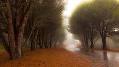 Fall into the story (Eunice Eunjin Oh) Tags: fallintothestory fall rain autumn outdoor trees fog misty travel moody santacruz california tranquil peacefulmoment calm