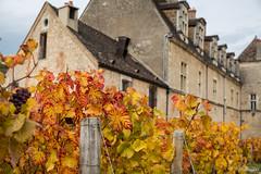 Rougeurs d'automne (Frd.C) Tags: vignes flickrfriday autumn automne vineyard france cotedor vougeot clos wine seasons saison