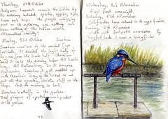 Kingfisher - EXPLORED (Hornbeam Arts) Tags: woodpecker birds art journal sketch stort canal