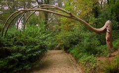 Halloween tree (thoskar) Tags: tree arbol parque sintra portugal landscape nature naturaleza d3300 nikon green vegetacin camino road paisaje view halloween fantstico