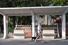 SDIM0489 (Mickey Huang) Tags: sigma dp2merrill dp2m foveonx3 taiwan 霧峰 光復新村 日常生活 street snap peo walkthedog