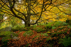 So much colour. (Ian Emerson) Tags: colourful autumnal autumn peakdistrict trees leaves rocks moss outdoor landscape orange green canon bark woodland yellow seasons