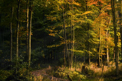Life is so much better with sun beams! (bill.d) Tags: autumn sunny fall landscape westlakenaturepreserve kalamazoocounty park us afternoon goldenhour outdoor unitedstates evening portage michigan