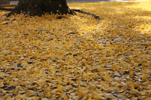 黄色のじゅうたん