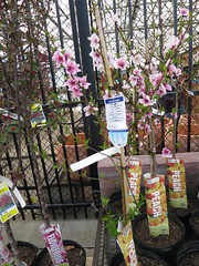 IMG_1401 (pbinder) Tags: 2016 201603 20160322 march mar tuesday tue kansas city missouri kansascity kansascitymissouri kc mo kcmo lowes plants