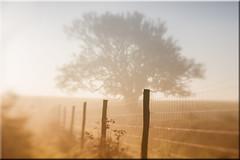 Morning Mist (Mark Wasteney) Tags: morning mist fog fence tree lensbaby splittone doubleglasselement devon northdevon