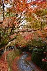 DSC02806 (MrSUIZOU) Tags: 京都 紅葉 北野天満宮 平野神社 十月桜