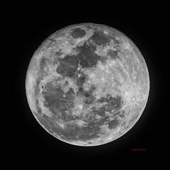 Moon (wittowio) Tags: moon astronomia luna astronony