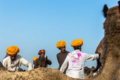Embrace | Pushkar camel fair,Rajasthan. (vjisin) Tags: pushkar rajasthan india iamnikon nikond3200 asia camel streetphotography street indianstreetphotography incredibleindia indianheritage travelphotography pushkarcamelfair herder inexplore outdoor sport animal travel 35mm nikon nikonofficial sunlight man