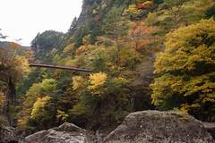 27Mitarai Valley (anglo10) Tags:   japan    valley  bridge  autumnleaves
