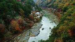 Kyoto Arashiyama (maco-nonchR) Tags: kioto kyoto arashiyama  kameyama park mtogura boat river tatsurariver  autumn fall lights