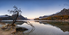 Ein ruhiger Morgen (Martin Häfeli Photography) Tags: sunrise nikon d7200 autumn herbst gold goldig goldenerherbst tree lonelytree lonely lake reflection reflections engadin oberengadin upperengadin graubünden grisons silsersee sils quite morning early water mountain mountains switzerland panorama panoramic landscape landschaft seascape sunset weitwinkel wide angle nikkor 1024