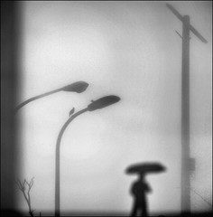 F_47A0542-BW-Canon 5DIII-Canon 70-300mm-May Lee  (May-margy) Tags:   maymargy bw           streetviewphotographytaiwan  linesformandlightandshadows  mylensandmyimagination  naturalcoincidencethrumylens    blur bokeh    taiwan repofchina f47a0542bw portrait viewfromback raining umbrella glass powerpole lightpoles tree birds newtaipeicity canon5diii canon70300mm maylee