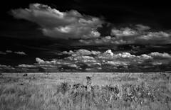 Butterfield Overland Despatch Marker (unknown quantity) Tags: sky blackandwhite monochrome clouds landscape horizon pasture infrared marker vaportrail shortgrassprairie cloudsstormssunsetssunrises
