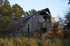 Barn (canaan.farmer) Tags: wood building tree rot abandoned nature field grass metal shop loft farmhouse barn tin weeds rust timber farm wheat board garage rustic grain shed ruin meadow straw stall structure storage arkansas hay agriculture livestock stable dilapidated agricultural hayloft