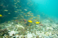 20150926-DSC_6280.jpg (d3_plus) Tags: sea sky fish beach japan scenery underwater diving snorkeling  shizuoka    apnea izu j4           nikon1 togai  1030mm nakagi  1   1030mmpd wpn3
