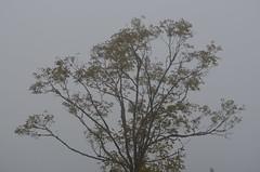 Toggenburg SG - Herbst auf der Wolzenalp