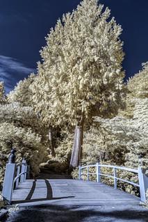 Kubota Japanese Garden Infrared (Seattle, Washington)