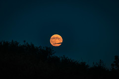 Rising blood moon (Aquagg) Tags: night canon moonrise oxfordshire bloodmoon supermoon canonefs1855mmf3556isii canoneos70d cloudsacrossmoon