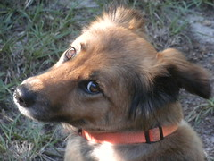 Hannah (Just Back) Tags: life camera dog chien brown love wet girl face mouth fur nose see eyes furry view sweet head lips whiskers vision hund seeing jaws alive sweetheart snout muzzle aware meine liebling miene