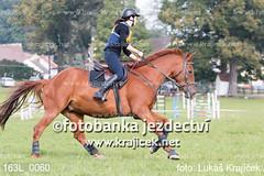 163L_0060 (Lukas Krajicek) Tags: military czechrepublic cz kon koně vysočina vysoina southbohemianregion blažejov dvoreček všestrannost dvoreek