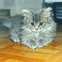 00390 (d_fust) Tags: cat kitten gato katze  macska gatto fust kedi  anak katt gatito kissa ktzchen gattino kucing   katje     yavrusu