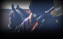 Surero (Eduardo Amorim) Tags: horse southamerica argentina argentine criollo caballo cheval mate pferde cavallo cavalo gauchos pferd halter cuia ayacucho pampa riendas apero gaucho cavall badana  faca amricadosul platera bozal gacho cabezada amriquedusud provinciadebuenosaires reins bastos  recado gachos  basto sudamrica suramrica amricadelsur sdamerika crioulo caballoscriollos criollos  pilchas buenosairesprovince cabeada facn pilchasgauchas recao pampaargentina americadelsud plateracriolla lombilho crioulos cavalocrioulo americameridionale caballocriollo rdeas eduardoamorim cavaloscrioulos fiador bual lomillo pampaargentino