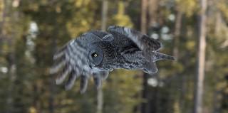 Silent flight