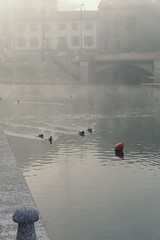 PRESENCE-4.jpg (Adamo M. Moses) Tags: milan fog moody sony atmosphere nebbia atmosfera myst foschia diffusedlight a6000
