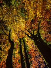 PhoTones Works #7294 (TAKUMA KIMURA) Tags: autumn fall nature leaves river landscape scenery olympus     omd kimura em1  ukan  takuma    photones