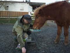 R0024636 (joachimelbing) Tags: mhle mit spielen pferden flaumur mhlespiel flumi
