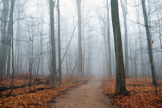 Late Fall Fog