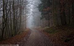 On a cold late November Morning 2. (andreasheinrich) Tags: november trees cold misty fog forest germany deutschland moody nebel path bald kalt wald bäume weg kahl badenwürttemberg düster neckarsulm neblig nikond7000