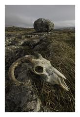 Stones and Bones (Malajusted1) Tags: skull yorkshire north scales limestone moor karst ingleton ingleborough limestonepavement erratic yorkshiredalesnationalpark twistletonscar